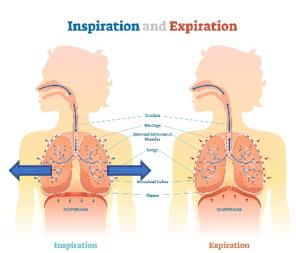 Respiration costo-latérale